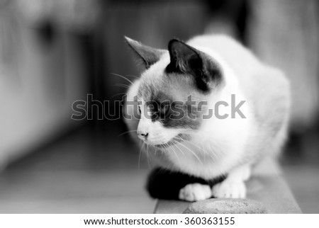 Cat looking , white and black color - stock photo