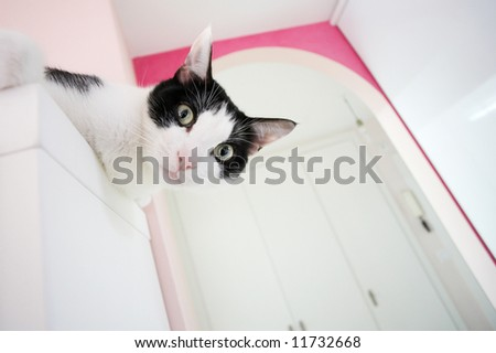 Cat looking with attention at you. Selective focus on eyes, all background defocused - stock photo