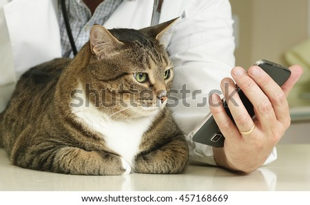 Cat looks at veterinarian's digital device - stock photo
