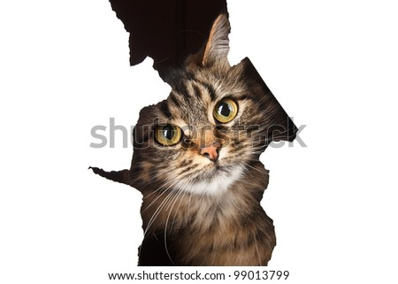 Cat looks out of a paper hole, isolated on white background - stock photo