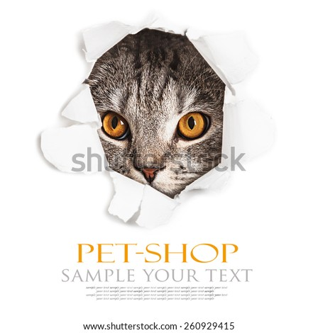Cat looks through a hole in paper. Place on paper can be used for the text. focus on eyes - stock photo