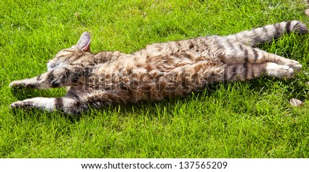 cat lounging on the lawn - stock photo