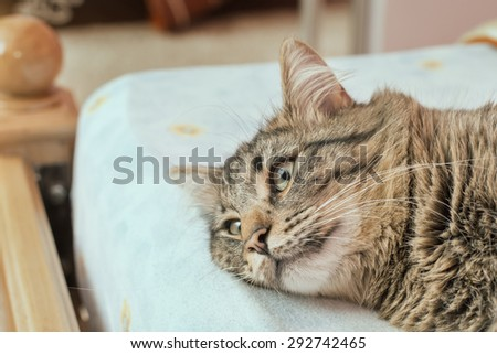 Cat lying in bed covered with blankets - stock photo