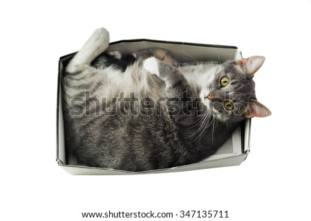 cat lying in box on white background. High-key photo technique. Focus on cats eyes - stock photo