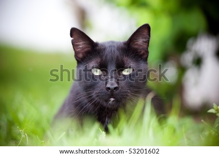 Cat lying in the grass - stock photo
