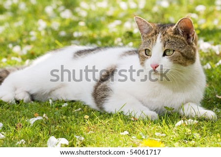 cat lying in the green gras in the garden and rests - stock photo