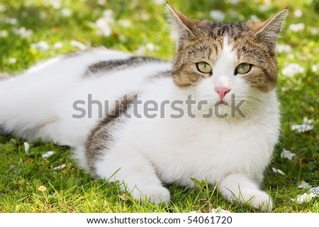 cat lying in the green gras in the garden and rests