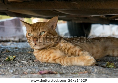 Cat lying in the street among the leaves - stock photo