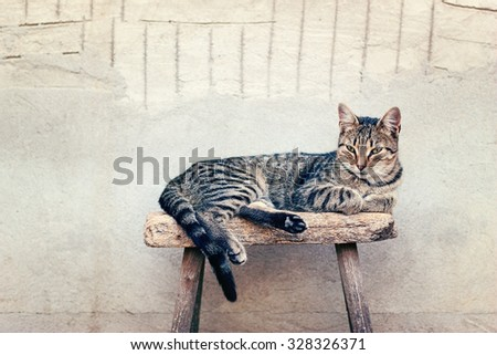 Cat lying motionless on an old stool - stock photo