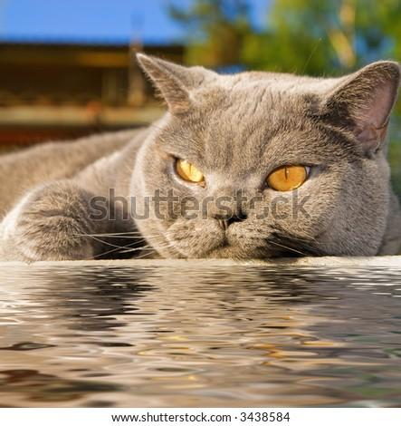 Cat lying near the water - stock photo