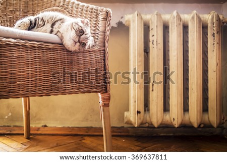 cat lying on a chair and heated near the hot radiator in the winter