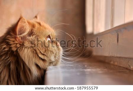 cat lying on a windowsill. - stock photo