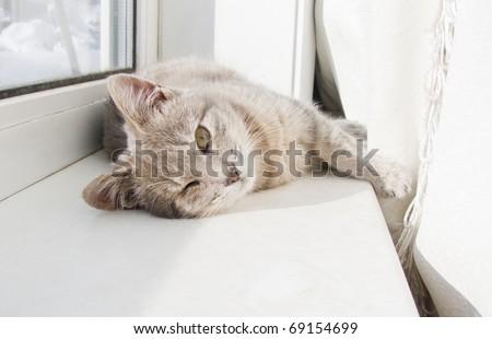 cat lying on a windowsill - stock photo