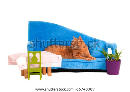 Cat lying on blue sofa is expecting guests for dinner - stock photo
