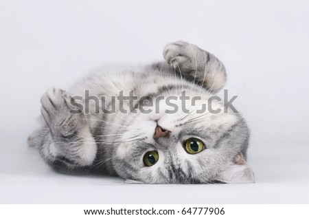 Cat lying on her back. - stock photo