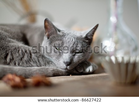 Cat lying on kitchen table with different spices and utensils - stock photo