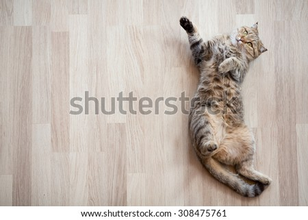 Cat lying on parquet floor top view