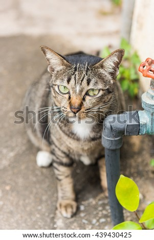 Cat lying on the cement. It looks at things interesting. Selective Focus. - stock photo
