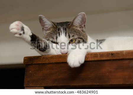 Cat lying on the cupboard