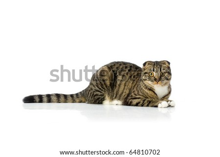 Cat lying on white isolated