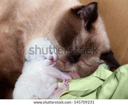 Sex of newborn kittens
