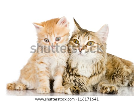 cat mother and her kitten together. isolated on white background - stock photo