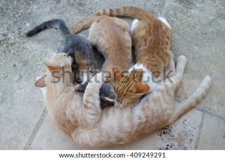 Cat Mother Nursing her small Kitten - stock photo