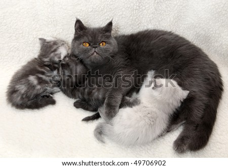 Cat mother with kittens - stock photo