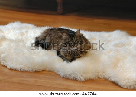 Cat Naping on Fur - stock photo
