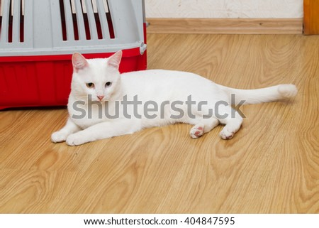 cat near a portable cabins