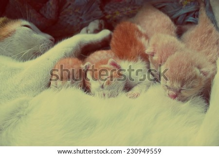 Cat nursing her kittens.The cat feeds a kittens  - stock photo