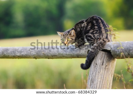 Cat observes tensely a dog - stock photo
