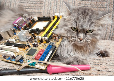 Cat ?omputer support engineer. - stock photo