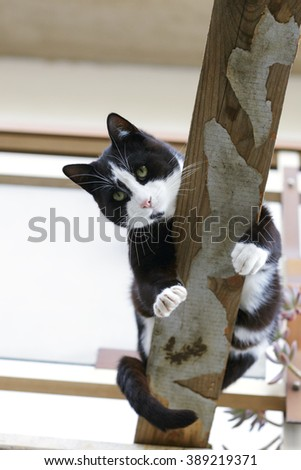 cat on a beam - stock photo