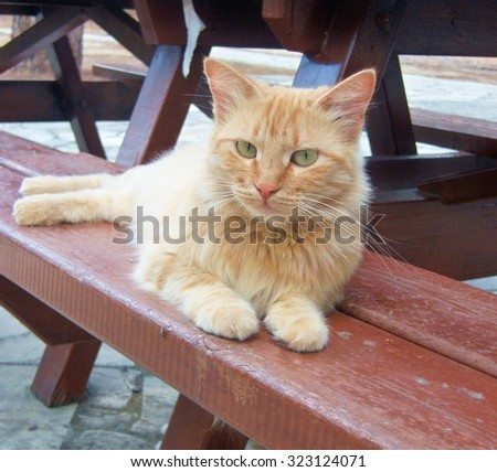 Cat on a bench in a park
