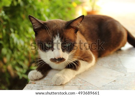 Cat on a cement table in a house