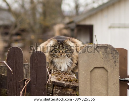 cat on a fence - stock photo
