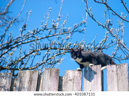 Cat on a fence. Neighbors cat is staring at photographer - stock photo