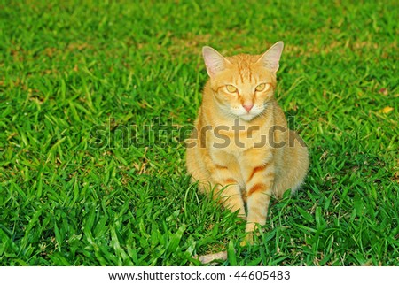 Cat On A Field - stock photo
