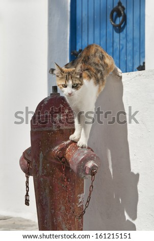 Cat, on a fire hydrant, Cyclades - stock photo