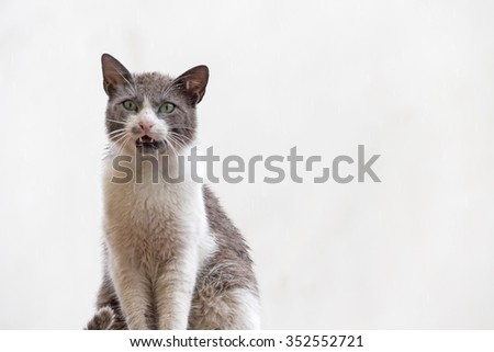 Cat on a light background