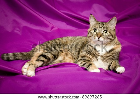 Cat on a purple background - stock photo