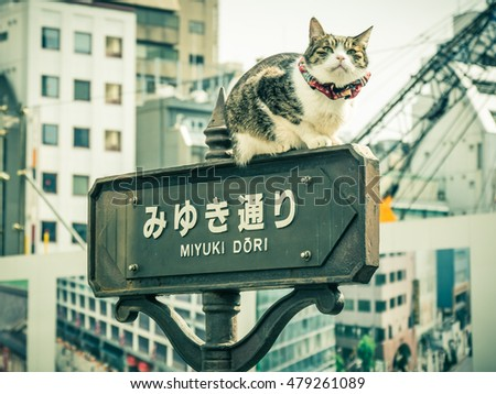cat on a signal in Ginza in Tokyo, Japan