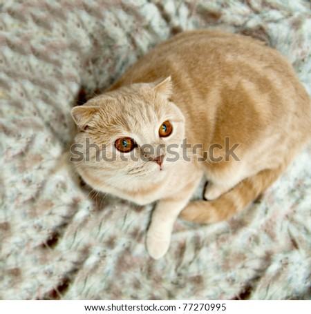 Cat on a sofa on a white background - stock photo