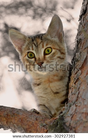 Cat on a tree branch - stock photo