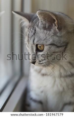 cat on a windowsill near the window - stock photo