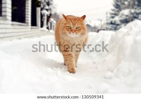 Cat on a winter walk - stock photo