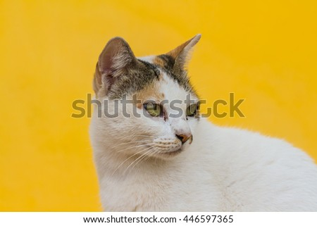 Cat on a yellow background - stock photo