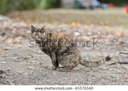 cat on beautiful autumn day - stock photo