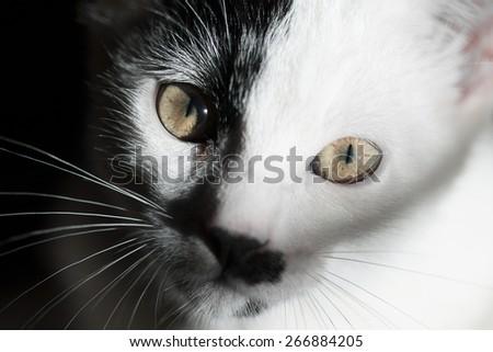 Cat on black background - stock photo